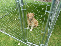 Pet Enclosures- Dogs